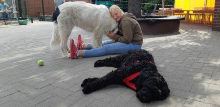 Mia mit den Hunden